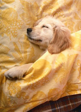 puppy sleeping in bed 17 best images about pets daylight saving time on