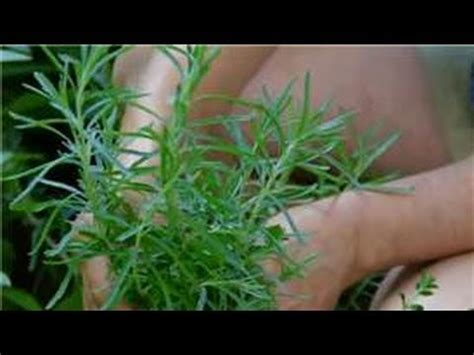 planning maintaining an edible garden how to care for lavender plants in the winter youtube