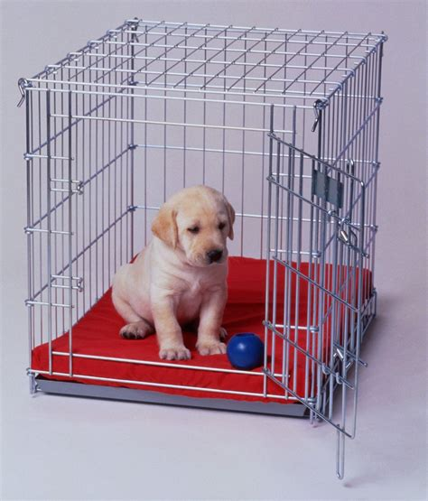 crate puppies 5 must tips for crate your puppy