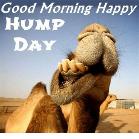 Happy Hump Day Meme - 25 best memes about hump day hump day memes