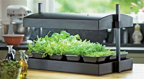 grow lettuce indoors   greens light garden