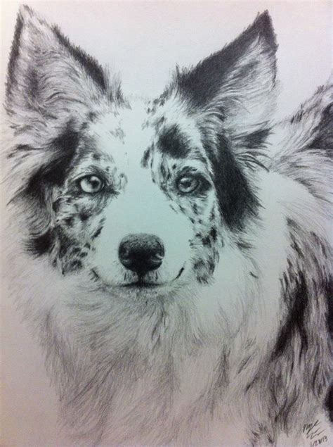 australian shepherd tattoo border collie mix pictures to pin on