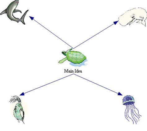 cheetah food chain diagram sea turtle food chain