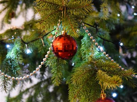 where to buy christmas trees in melbourne christmas