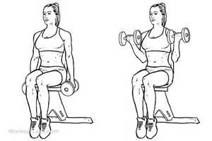 seated dumbbell curl illustrated exercise guide