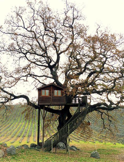 wooden tree wooden tree house in tuscany9 fubiz media