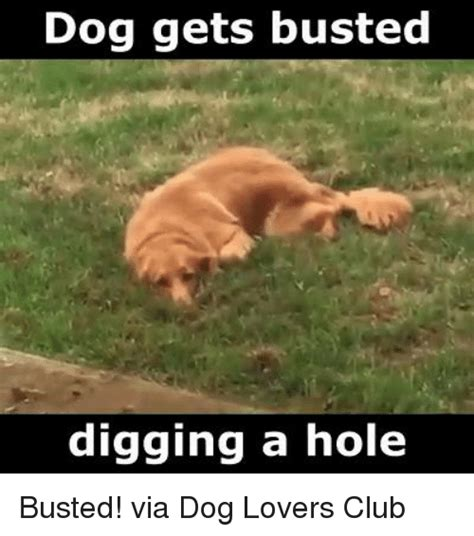 Dog Lover Meme - 25 best memes about dog lovers dog lovers memes