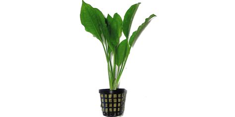Can You Buy Plants On Amazon | can you buy plants on amazon 100 can you buy plants on