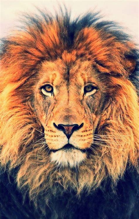 iphone  lock screen lion wallpaper