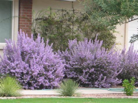 ideal desert landscaping plants at home bistrodre porch