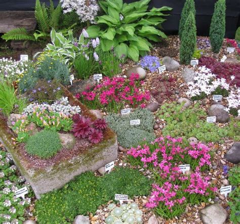 Alpine Garden by Pottertons Alpine Garden Nursery