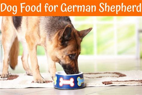 best food for german shepherd puppy ultimate guide to the best food for german shepherd in 2017 us bones