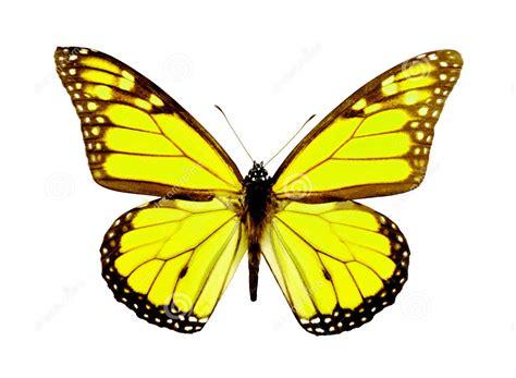 hewan lucu 2016 animasi bergerak kupu kupu terbang images