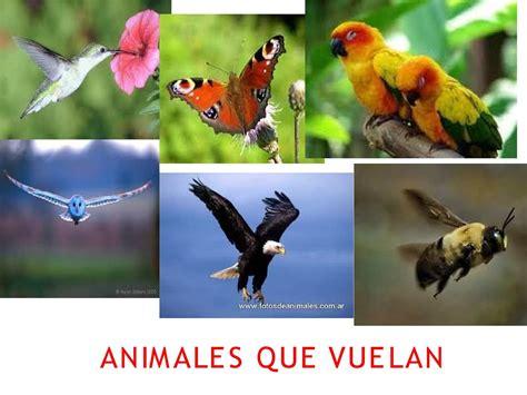 Imagenes Animales Que Vuelan   calam 233 o animales que vuelan