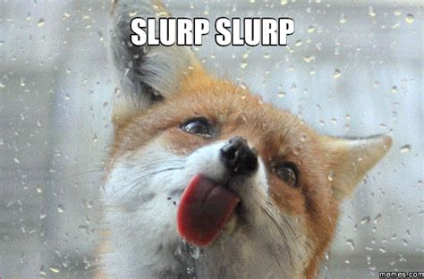 Licking Meme - fox licking window