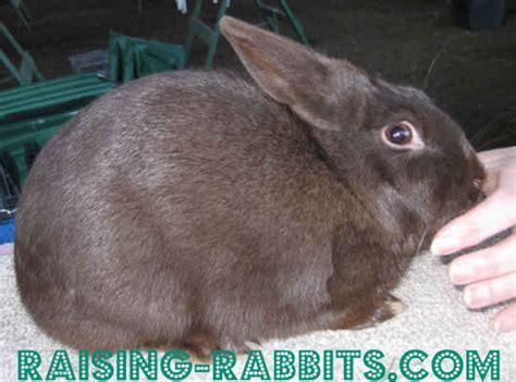 rabbit colors rabbit coat color genetics the genes rabbit colors