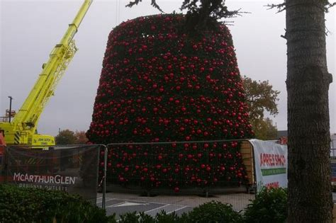 cheshire oaks famous giant christmas tree is on the way