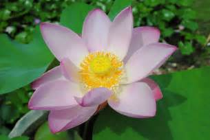 Lotus Flower Names Vegetables Are Smarter Than Fruits Three High Iq Japanese