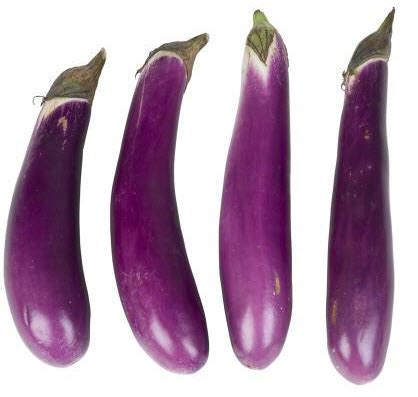 Bibit Terong Hijau Panjang benih terong ungu f1