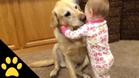 dogs protecting babies protecting baby is not only a pet but also a friend