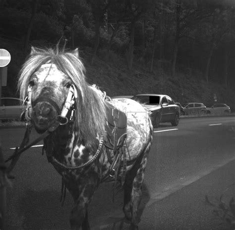 Motorrad Unfallstatistik Nach Marken by Eppstein In Hessen Pony Bei 59 Km H Auf Bundesstra 223 E