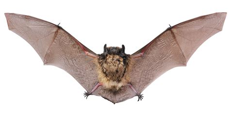 the meaning and symbolism of the word bat