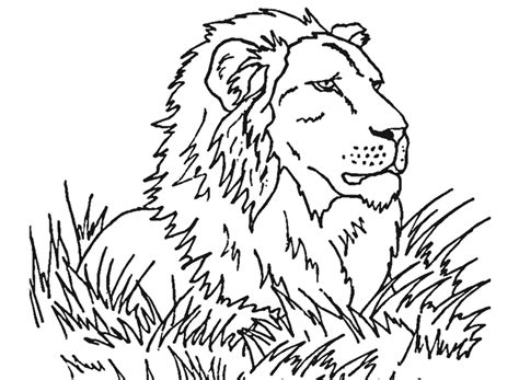 coloring pages of mountain lion kids coloring page gallery