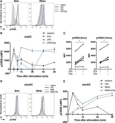 frontiers functional crosstalk between dendritic frontiers anaphylatoxin c5a regulates 6 sulfo lacnac