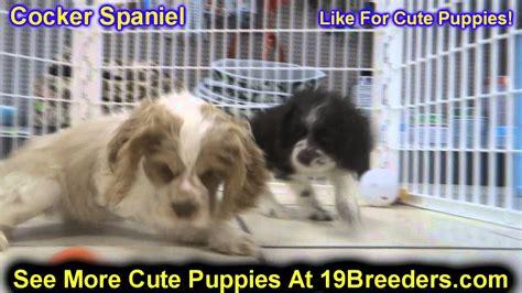 cocker spaniel puppies for sale in ga cocker spaniel puppies dogs for sale in atlanta ga