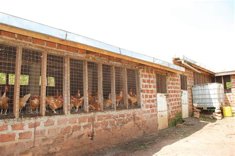 build a house how to build a poultry house for layers with guide how