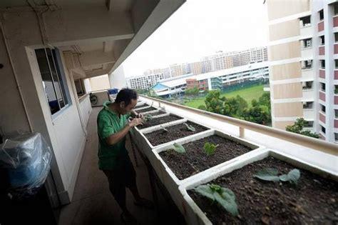 farming   hdb flats doorsteps latest singapore