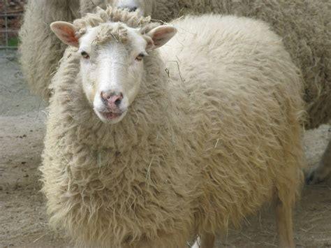 Wool Jute Rugs Wool Carpet Cleaning The Clean Scene Blog