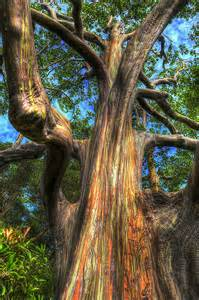 rainbow trees amazing places to visit nature 180 s painted tree the