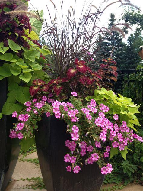 patio flowers full sun patio flowers pinterest patios flower and gardens