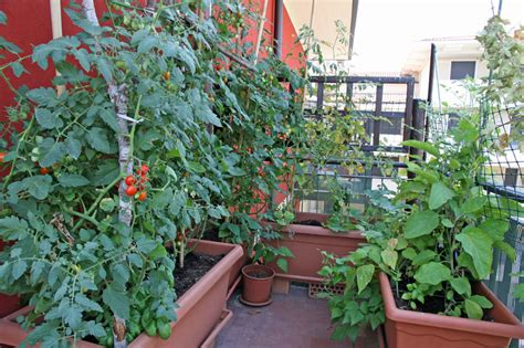 balcony vegetable gardens balcony and rooftop vegetable garden basics harvest to table