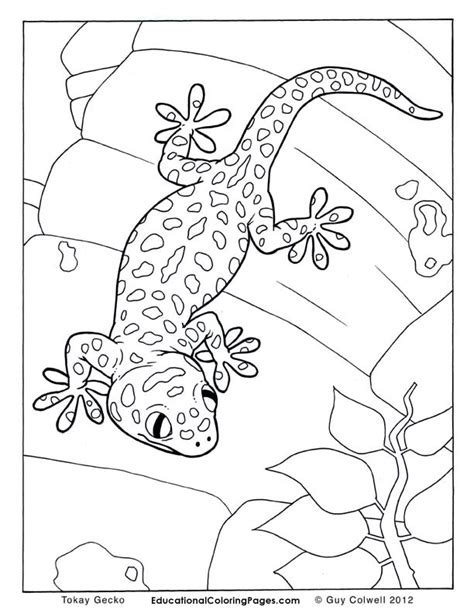 crawly creepers book one 171 animal coloring pages for kids