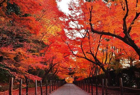 imagenes de otoño en japon 京都の紅葉狩りは毘沙門堂 洛東 と光明寺のルートがおすすめ 使えるトレンド 情報