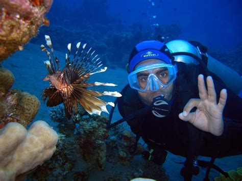 dive sea sea diving great deals on padi courses