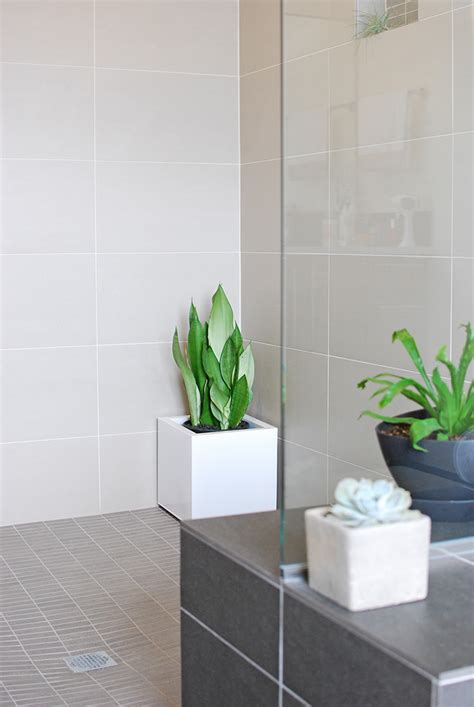 bath shower plants   join  trend  garden