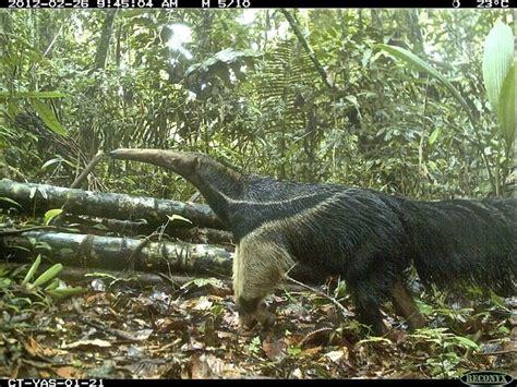 Tas Jansport Black Animal Planet c 226 meras escondidas capturam selfies animais e sua