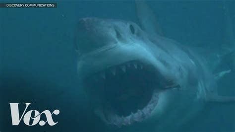 megalodon sharks still lives evidence that megalodon is not extinct image gallery megalodon exists