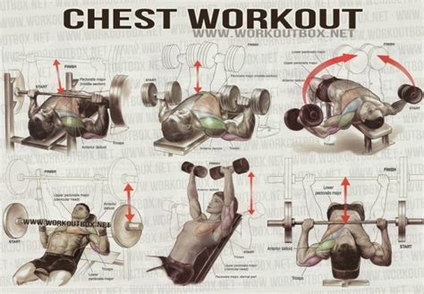 best chest and back workout