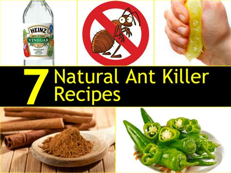 7 ant killer recipes