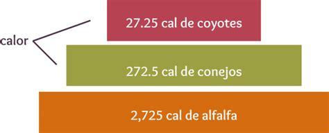 cadena alimenticia unam pir 225 mides ecol 243 gicas portal acad 233 mico del cch