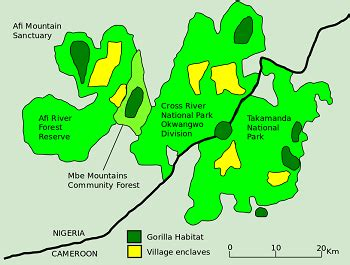 Cross River Gorilla: Reproduction & Facts | Study.com
