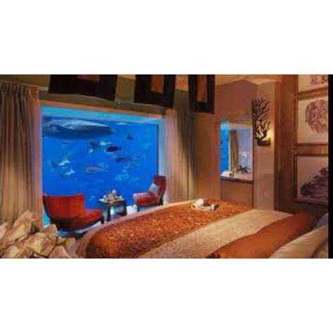 bedroom in aquarium awesome aquarium bedroom