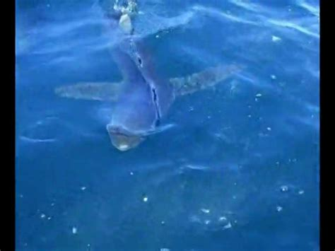baby shark url hd baby theres a shark in the water