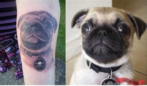 how much does a pug cost in australia black and grey arm pug tattoos black realistic portrait pug tattoos