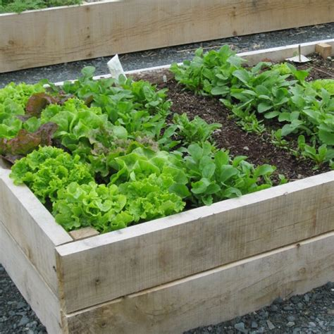 vegetable bed raised bed vegetable gardens worth it desain rumah