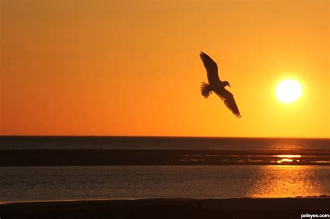 bird song ballad  lorna malla high  poems